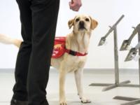Poliţia din Chile dresează câini pentru depistarea Covid-19