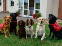 Tot mai mulți câini de rasă sunt furați în Marea Britanie