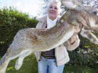 Cel mai mare iepure din lume a fost furat din gradina proprietarului său din Stoulton