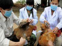 China raportează primul caz din lume de gripă aviară H10N3 la om