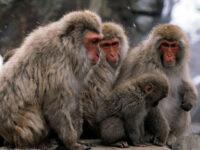 Un nou virus transmis de animale face victime