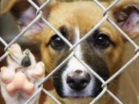 Londra va evacua sute de câini şi pisici din Kabul
